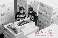 深圳宝安机场海关关员验放进口冰鲜三文鱼