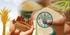 携手共发展 韩国多种优质农产品首次入华亮相