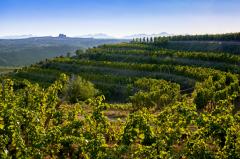 瓏岱酒庄曾于2019年迎接八方来客,推出了首个年份葡萄